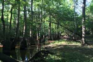 Bogue Chitto Creek Hunting Paradise in Neshoba, MS (10 of 22)
