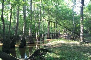 Bogue Chitto Creek Hunting Paradise in Neshoba, MS (19 of 22)