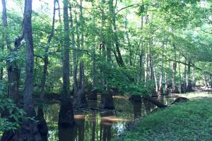 Bogue Chitto Creek Hunting Paradise in Neshoba, MS (18 of 22)