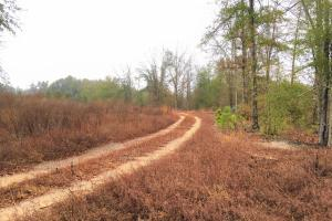 Aiken Long Leaf Tract with Homesite