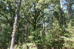 38 ac Montgomery Co Timber Tract - Montgomery County MS