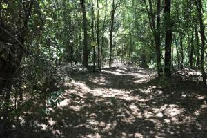 Riverfront Hunting Land and Poultry Farm Opportunity in Sampson, NC (7 of 21)