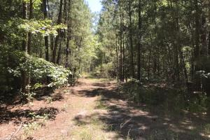 Riverfront Hunting Land and Poultry Farm Opportunity in Sampson, NC (10 of 21)