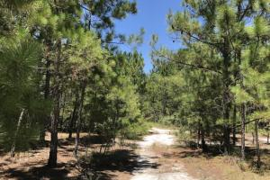 Riverfront Hunting Land and Poultry Farm Opportunity in Sampson, NC (14 of 21)