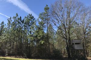 Longleaf Citronelle Road Timber and Hunting Investment - Mobile County AL