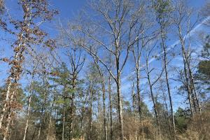 Gulfcrest Road Longleaf Timber and Hunting Investment - Mobile County AL
