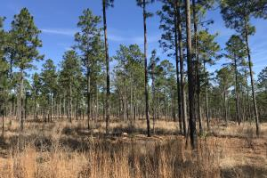 Gulfcrest Citronelle Road Hunting and Timber Retreat - Mobile County AL