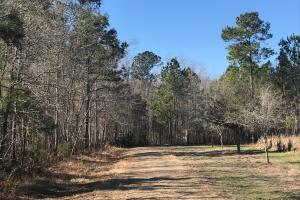 Spiers Circle Home Site  - Berkeley County SC
