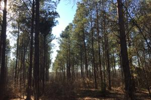 Sandy Grove Road Timber and Recreation - Kershaw County SC