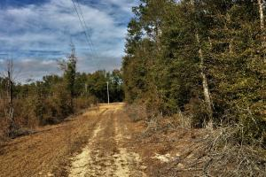 Hunting Property with Home Site - Barnwell County SC