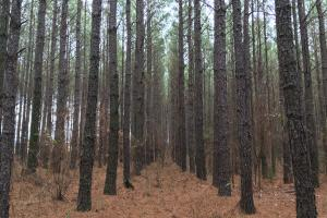 Hunting Property with Timber - Wilkes County GA