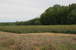 Premier Recreational Tract and Crop Land