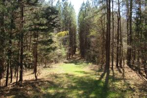 184 Acres in Attala County in Attala, MS (6 of 13)