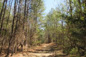 184 Acres in Attala County in Attala, MS (4 of 13)
