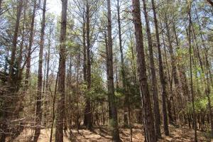 184 Acres in Attala County in Attala, MS (5 of 13)