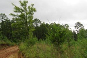 Secluded Hunting & Recreational Tract in Attala, MS (7 of 18)