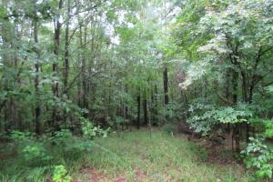 Secluded Hunting & Recreational Tract in Attala, MS (12 of 18)