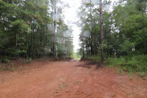 Secluded Hunting & Recreational Tract in Attala, MS (5 of 18)