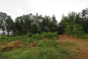 Secluded Hunting & Recreational Tract in Attala, MS (15 of 18)