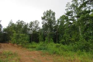 Secluded Hunting & Recreational Tract in Attala, MS (9 of 18)
