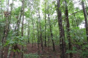 Secluded Hunting & Recreational Tract in Attala, MS (3 of 18)