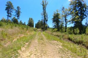 40+/- Acre Ouachita Mountain Hunting & Creek SEALED BID in Perry, AR (14 of 67)