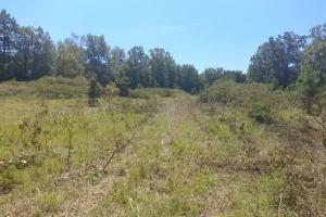 40+/- Acre Ouachita Mountain Hunting & Creek SEALED BID in Perry, AR (11 of 67)
