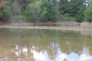 40+/- Acre Ouachita Mountain Hunting & Creek SEALED BID in Perry, AR (35 of 67)
