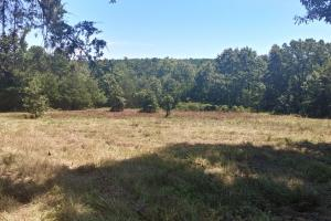 40+/- Acre Ouachita Mountain Hunting & Creek SEALED BID in Perry, AR (16 of 67)