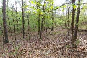 40+/- Acre Ouachita Mountain Hunting & Creek SEALED BID in Perry, AR (32 of 67)