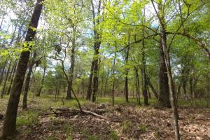 40+/- Acre Ouachita Mountain Hunting & Creek SEALED BID in Perry, AR (64 of 67)