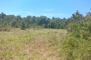 40+/- Acre Ouachita Mountain Hunting & Creek SEALED BID in Perry, AR (7 of 67)
