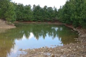 40+/- Acre Ouachita Mountain Hunting & Creek SEALED BID in Perry, AR (34 of 67)