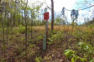 40+/- Acre Ouachita Mountain Hunting & Creek SEALED BID in Perry, AR (39 of 67)