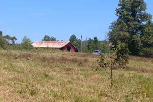 40+/- Acre Ouachita Mountain Hunting & Creek SEALED BID in Perry, AR (22 of 67)