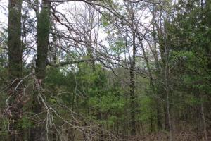 40+/- Acre Ouachita Mountain Hunting & Creek SEALED BID in Perry, AR (40 of 67)