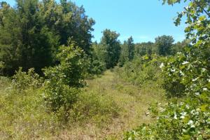 40+/- Acre Ouachita Mountain Hunting & Creek SEALED BID in Perry, AR (21 of 67)