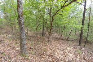 40+/- Acre Ouachita Mountain Hunting & Creek SEALED BID in Perry, AR (43 of 67)