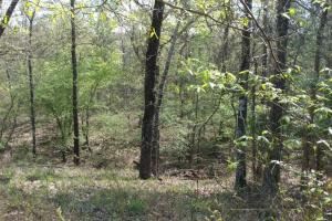 40+/- Acre Ouachita Mountain Hunting & Creek SEALED BID in Perry, AR (44 of 67)