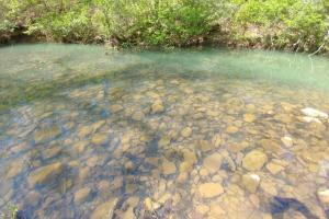 40+/- Acre Ouachita Mountain Hunting & Creek SEALED BID in Perry, AR (47 of 67)