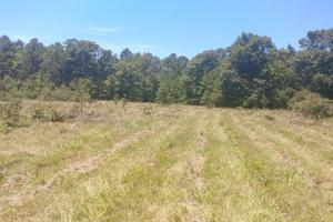 40+/- Acre Ouachita Mountain Hunting & Creek SEALED BID in Perry, AR (8 of 67)