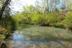 40+/- Acre Ouachita Mountain Hunting & Creek SEALED BID in Perry, AR (49 of 67)