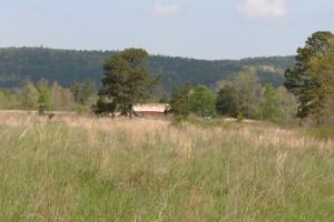 40+/- Acre Ouachita Mountain Hunting & Creek SEALED BID in Perry, AR (50 of 67)