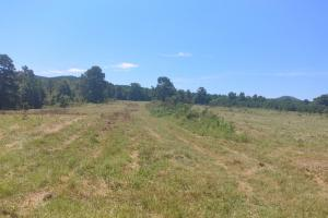 40+/- Acre Ouachita Mountain Hunting & Creek SEALED BID in Perry, AR (5 of 67)