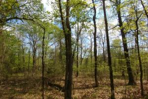 40+/- Acre Ouachita Mountain Hunting & Creek SEALED BID in Perry, AR (51 of 67)