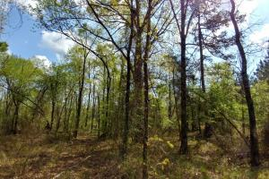 40+/- Acre Ouachita Mountain Hunting & Creek SEALED BID in Perry, AR (52 of 67)