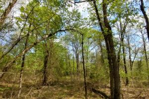 40+/- Acre Ouachita Mountain Hunting & Creek SEALED BID in Perry, AR (53 of 67)