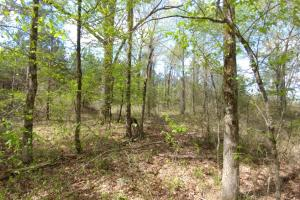 40+/- Acre Ouachita Mountain Hunting & Creek SEALED BID in Perry, AR (54 of 67)
