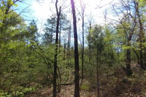 40+/- Acre Ouachita Mountain Hunting & Creek SEALED BID in Perry, AR (56 of 67)