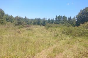 40+/- Acre Ouachita Mountain Hunting & Creek SEALED BID in Perry, AR (9 of 67)